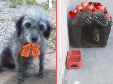 Cachorrinha de rua vira recepcionista de PetShop em Taquari/RS