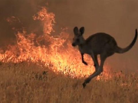 Meio bilhão de ANIMAIS já morreram em incêndios na Austrália, informa universidade