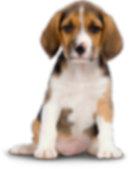 png-hd-dogs-dog-png-image-png-image-417.