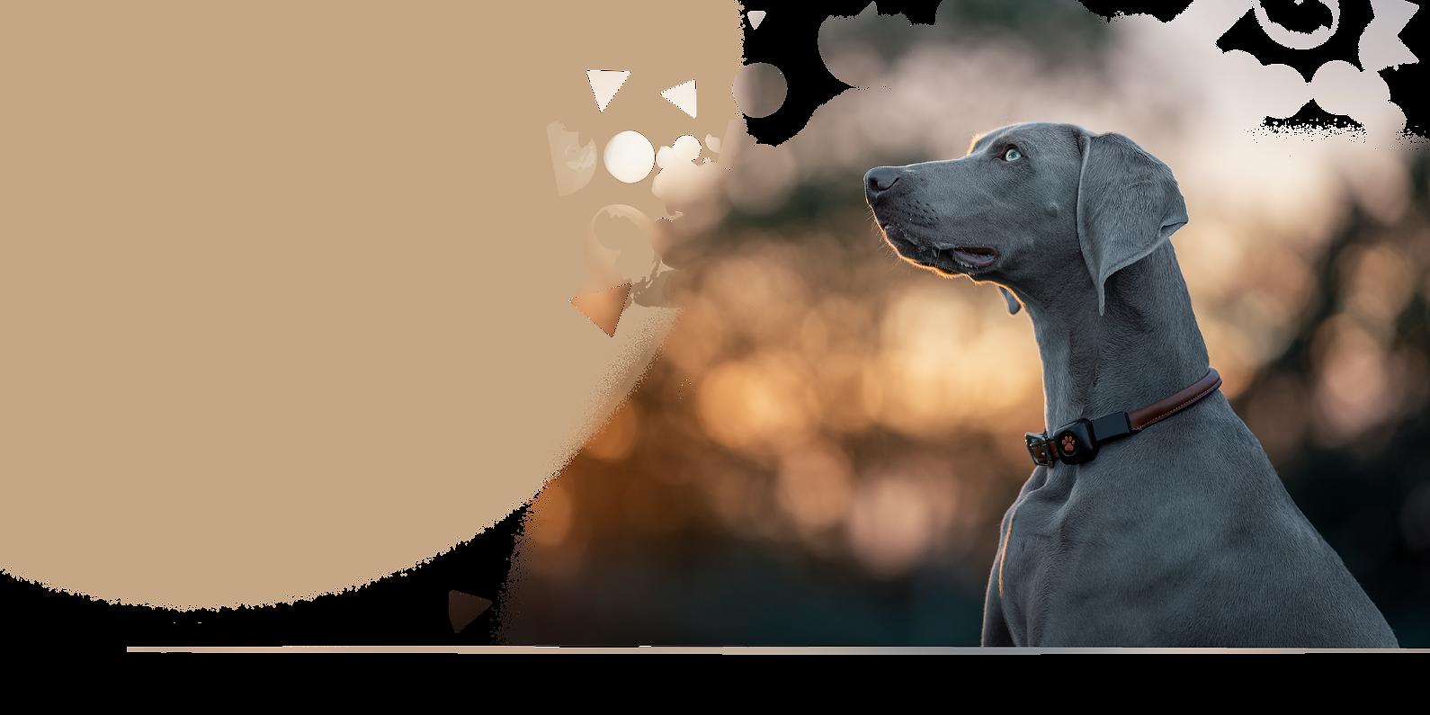 Dog Photos Gift Voucher 2020 Website Bac