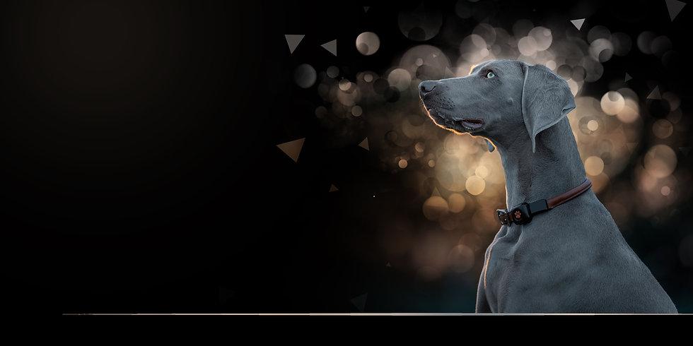 Dog Photos Gift Voucher 2020 Website.jpg