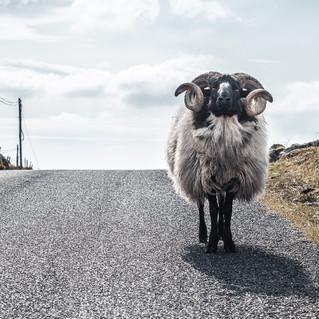 Around Ireland