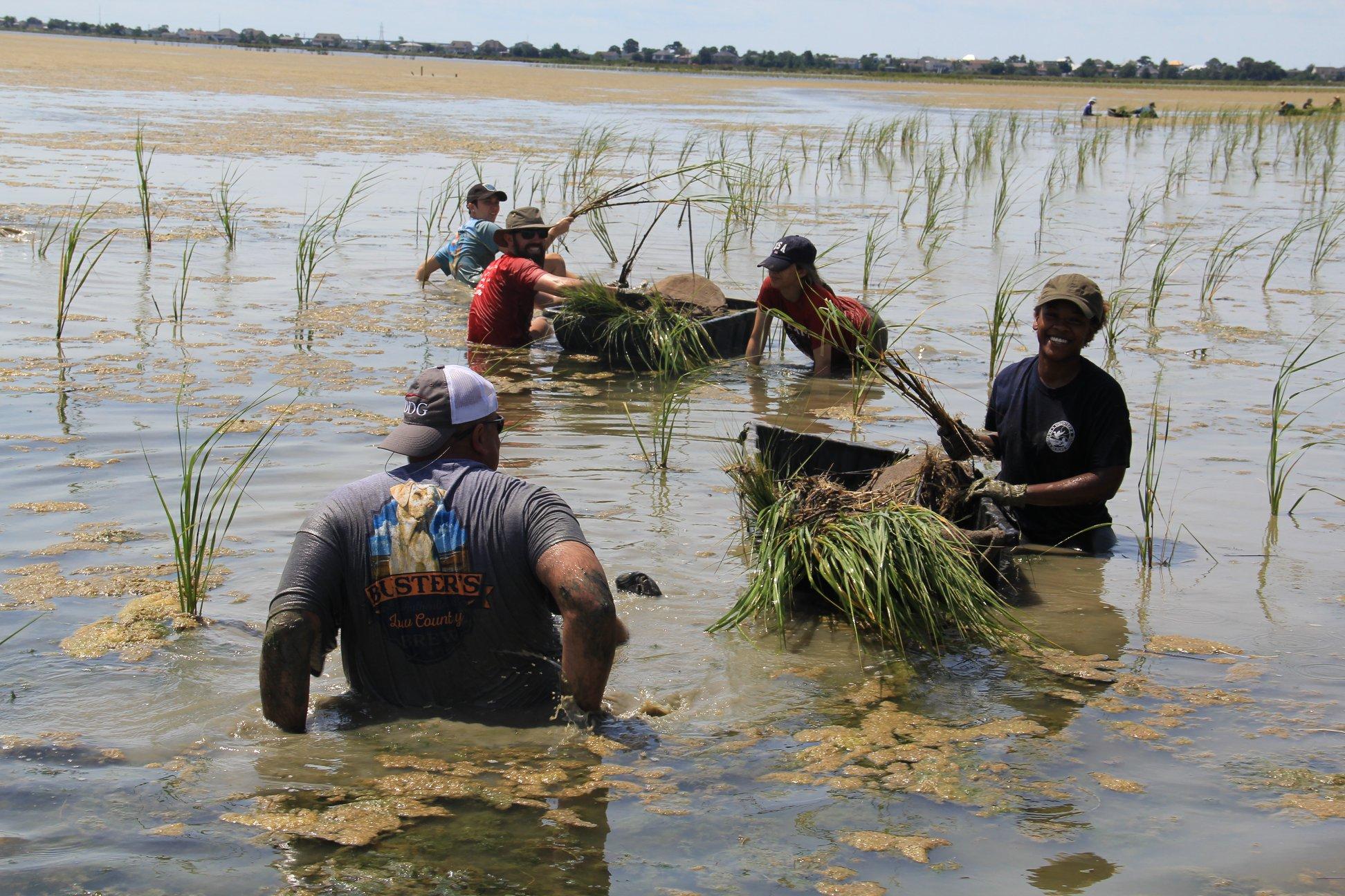 Restoring Louisiana's marshlands