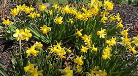 flowers-yellow.png