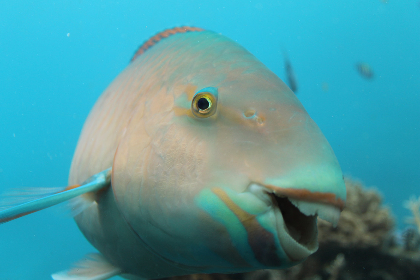 Judy Keegan   Parrot Fish