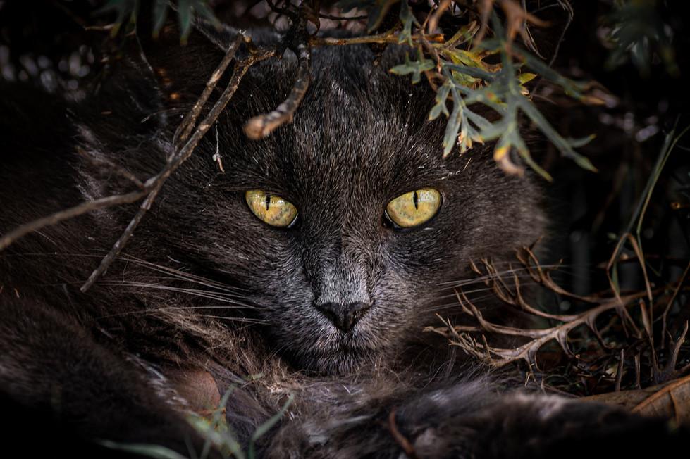Rosemarie Edwards - The hunter (MERIT)