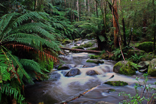 Peter Keegan - Forest Stream - HONOUR