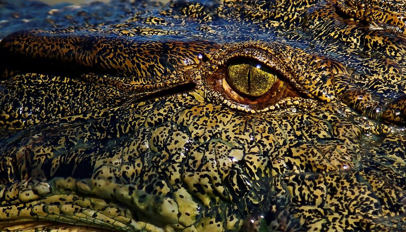 Margaret Kossowski   Crocs eye - MERIT
