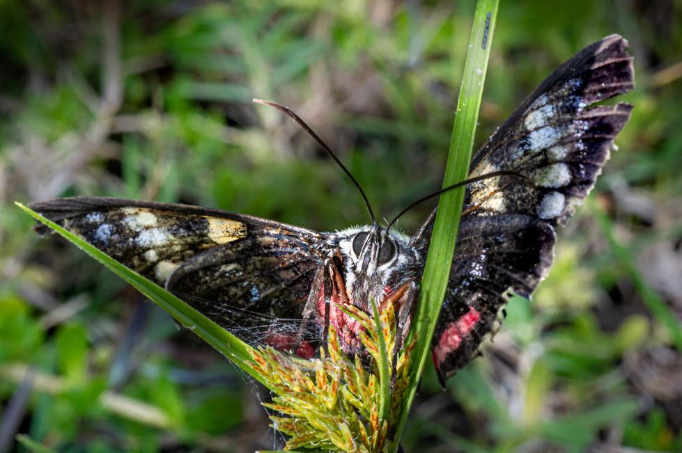 Rosemarie Edwards - Fluttering Lepidoptera - MERIT
