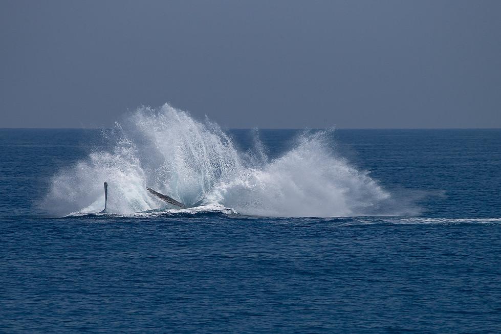 John Abbott - Whale Watch - MERIT