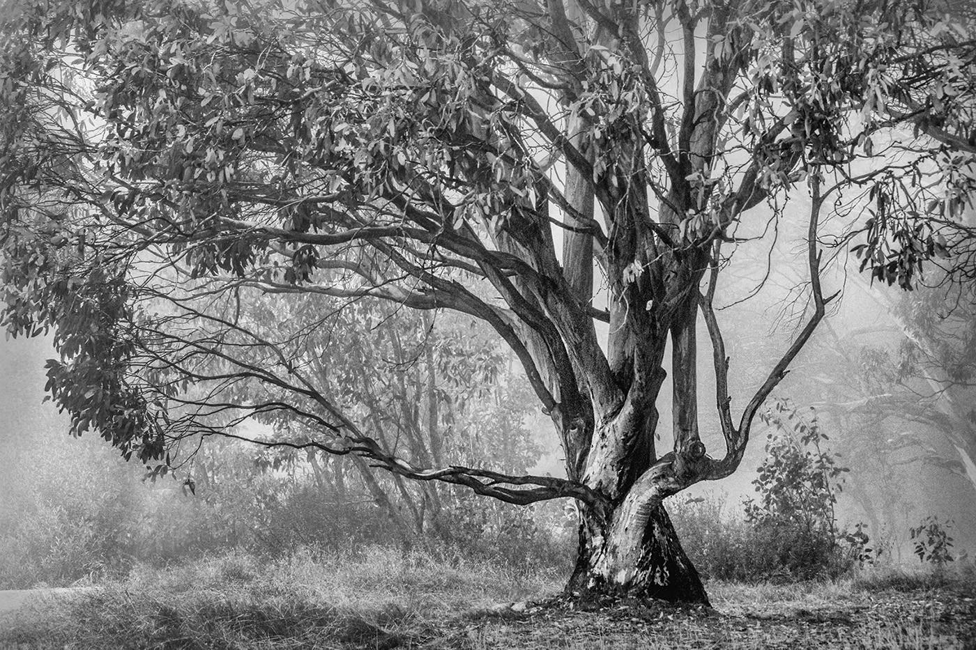 Di Wyatt - Faraway tree MERIT.jpg