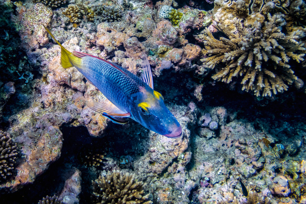 Robert Virgin | Coral Reef Fish