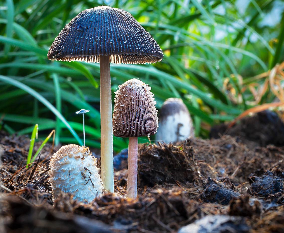 John Abbott - Fungi  Garden - MERIT