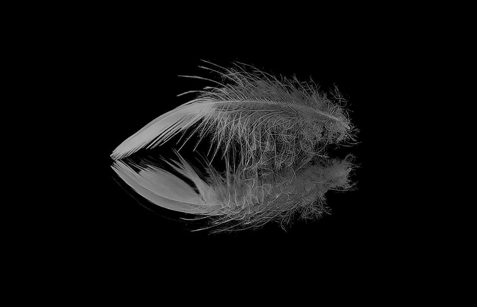 Margaret Kossowski - The feather