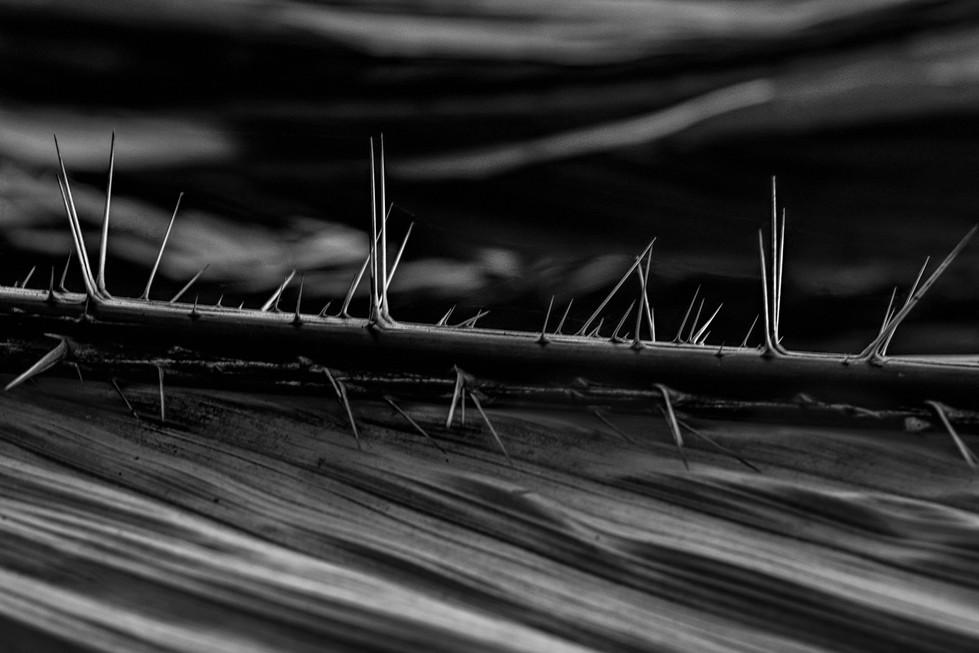 Hans Schmidt | A thorny road
