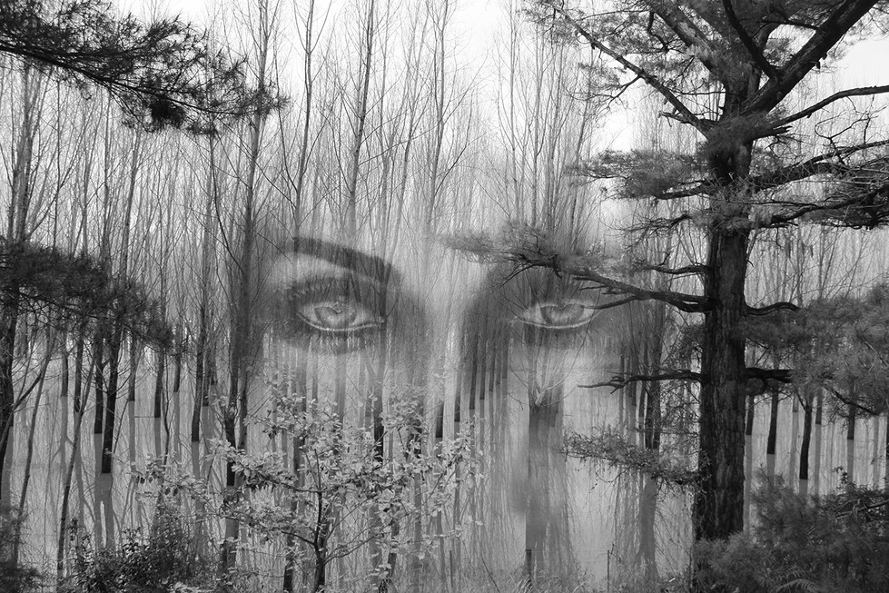 Di Wyatt - Eyes in the Forest - HONOUR