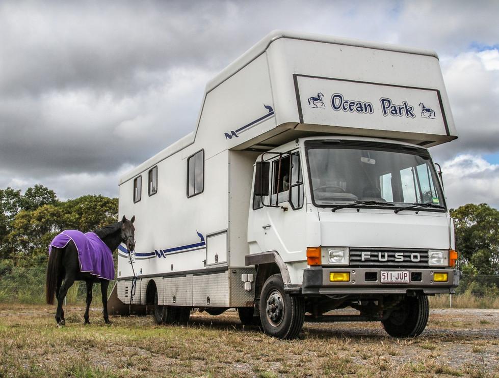 Violet Whitaker - Ocean Park Horse Transport MERIT