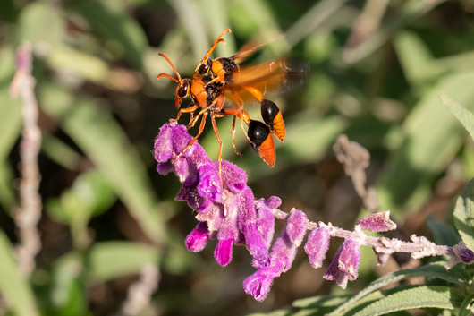 John Abbott - Mud Wasp Together (MERIT)