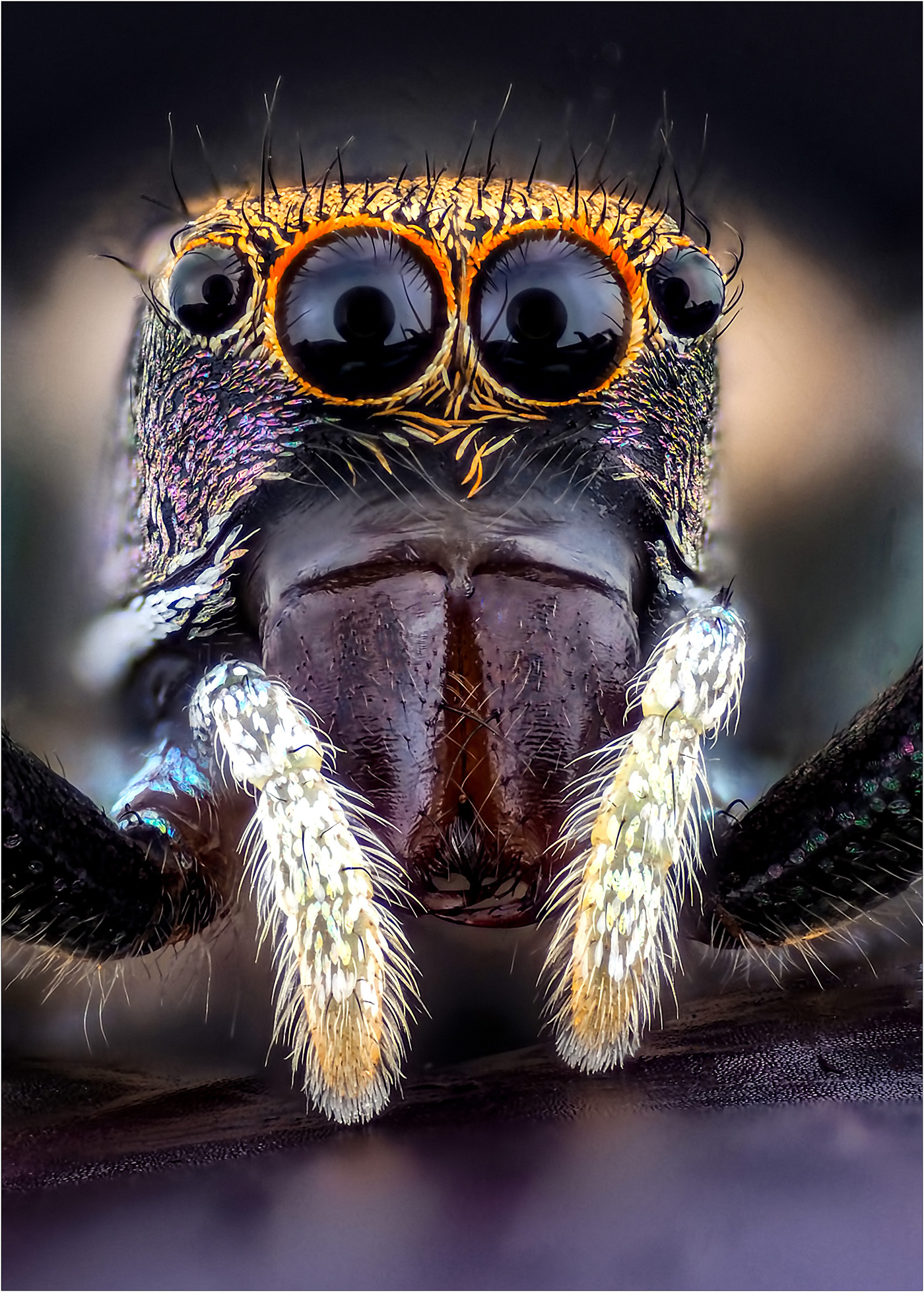 Don Binkins - Jumping Spider