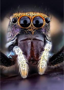 Don Binkins - Jumping Spider