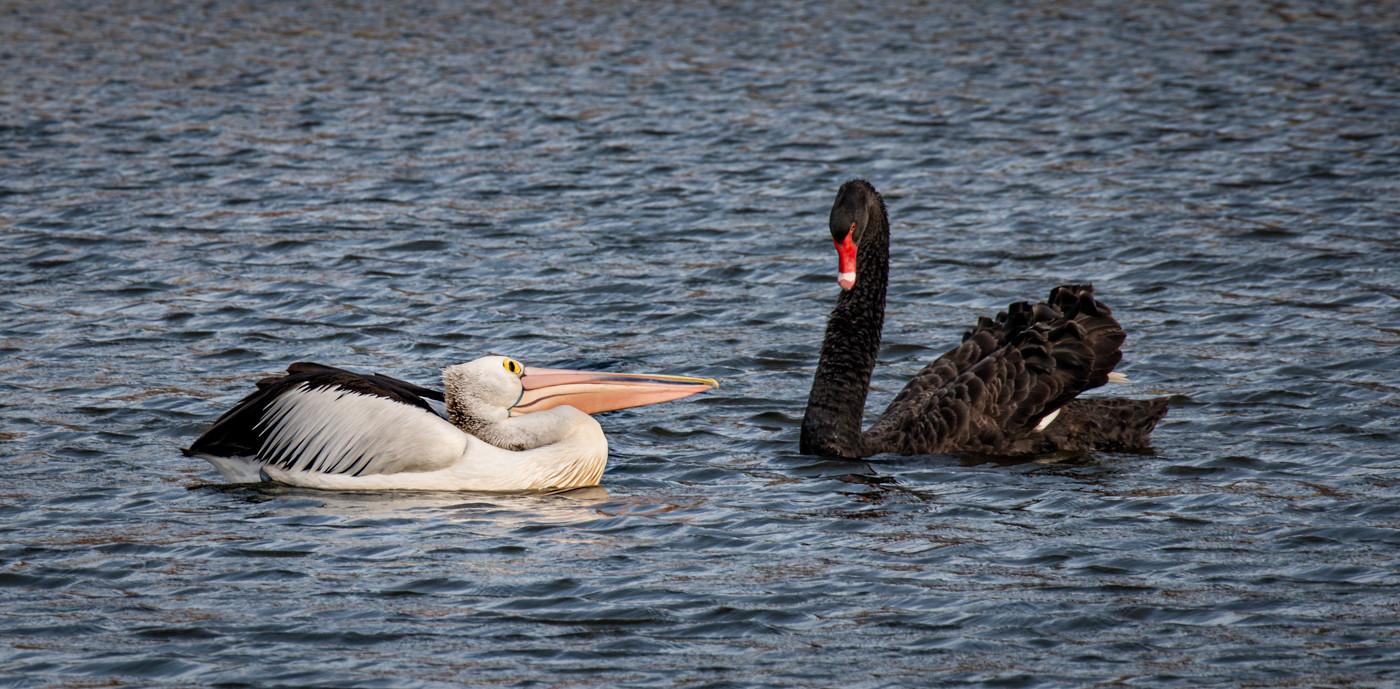 Rosemaries Edwards - This is my territory Beaky - MERIT