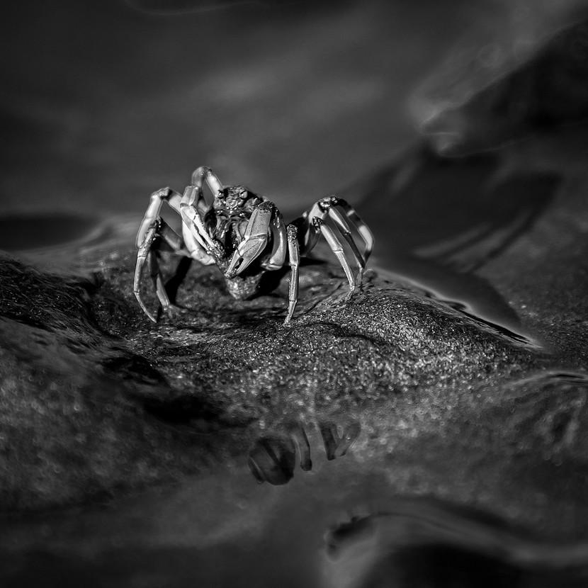 Warren Thomson - Crabby Encounter