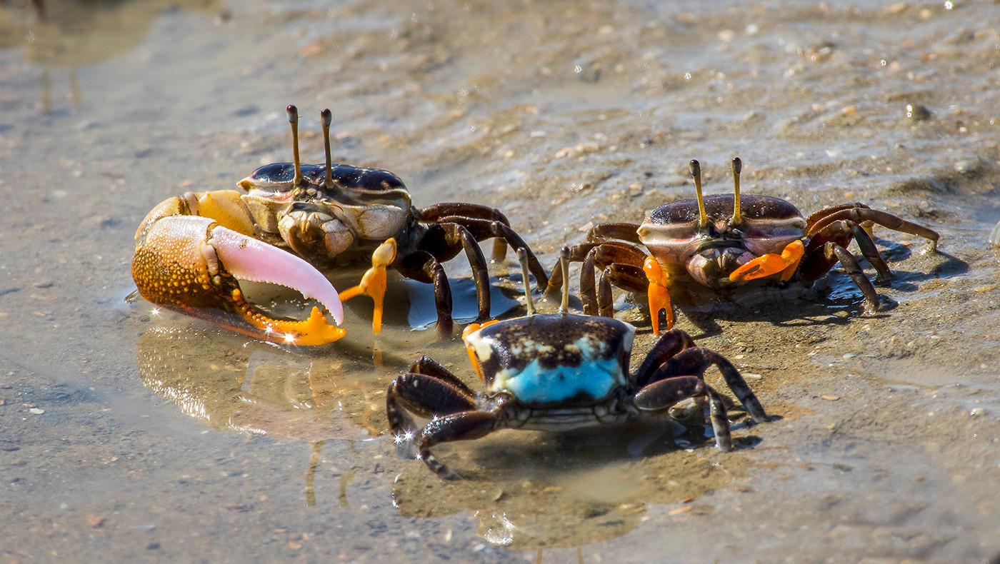 John Abbott   Crabs - HONOUR
