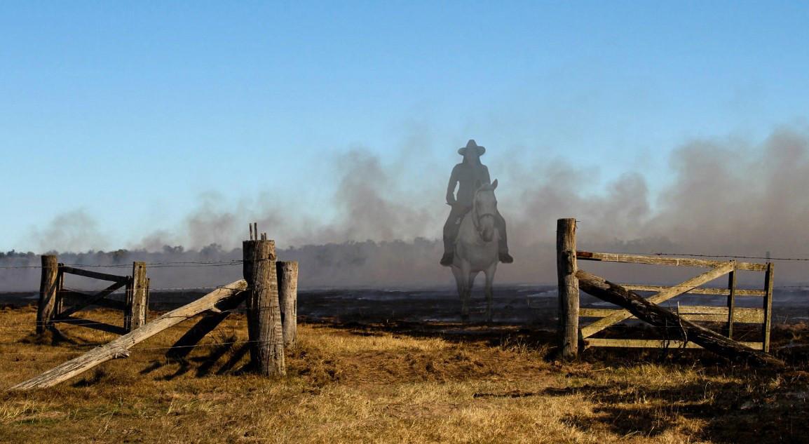 Violet Whitaker - Boundary Rider - HONOUR