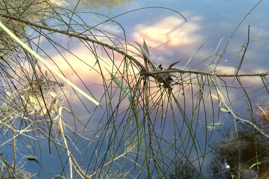 Di Wyatt-Reflections in a Pond