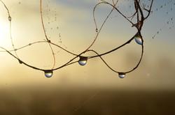 Janelle  Hultgren - Natures Pearls