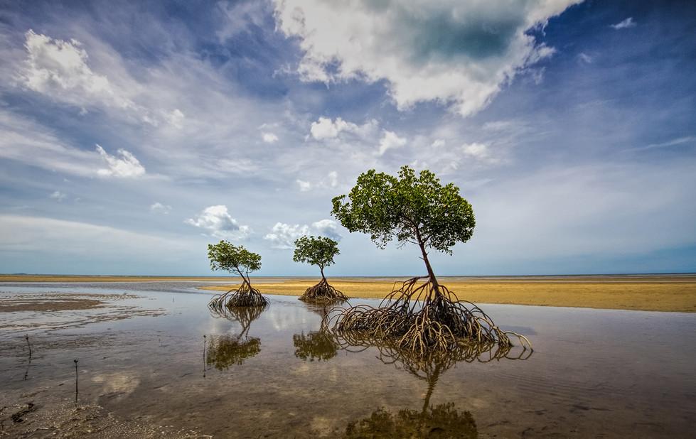 Hans Schmidt | Mangroves - HONOUR