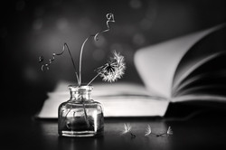 Susie Thompson - A Book Of Wishes