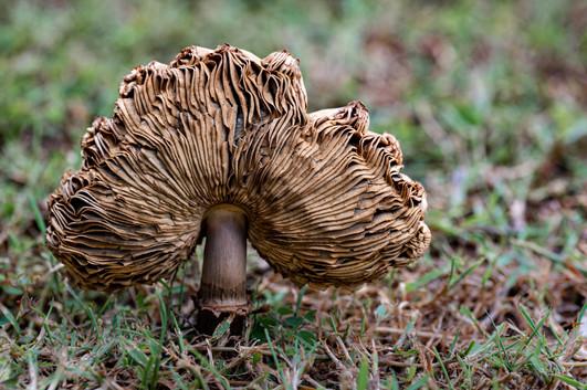 Rosemarie Edwards - Fungal upturn - MERIT