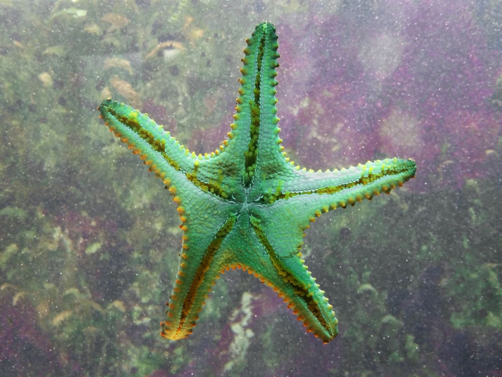 Celina Hurworth | Starfish