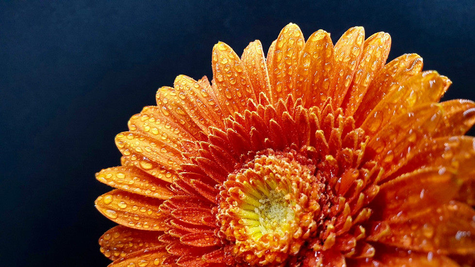 Janelle Hultgren - Orange Delight HONOUR