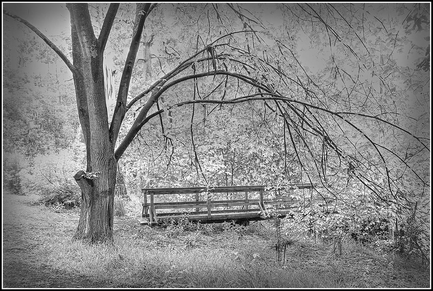 Di Wyatt - A quiet place MERIT.jpg