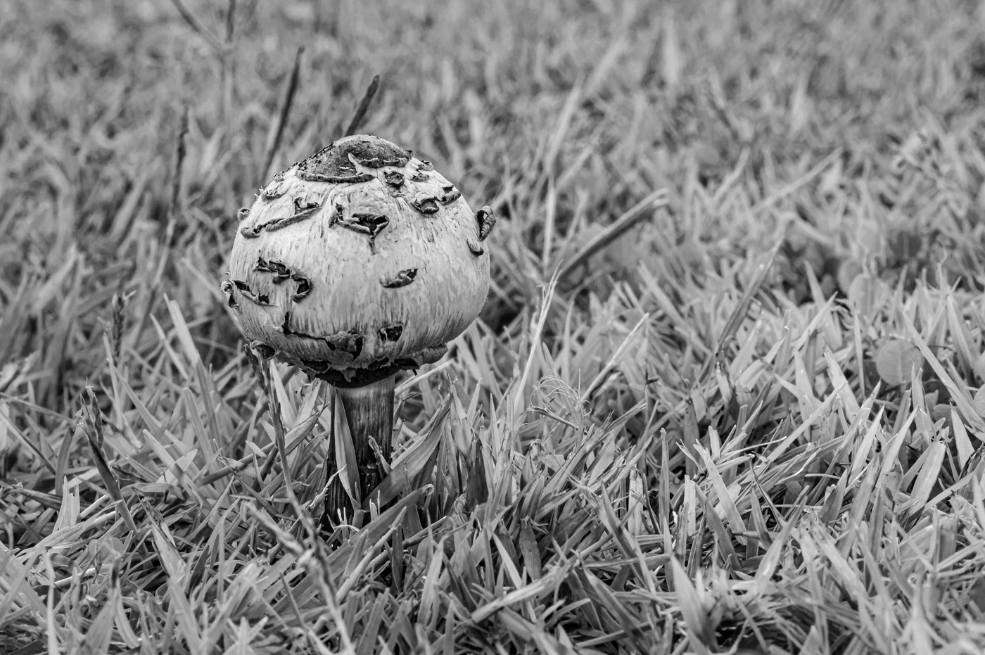 Rosemarie Edwards - Fungus in a field