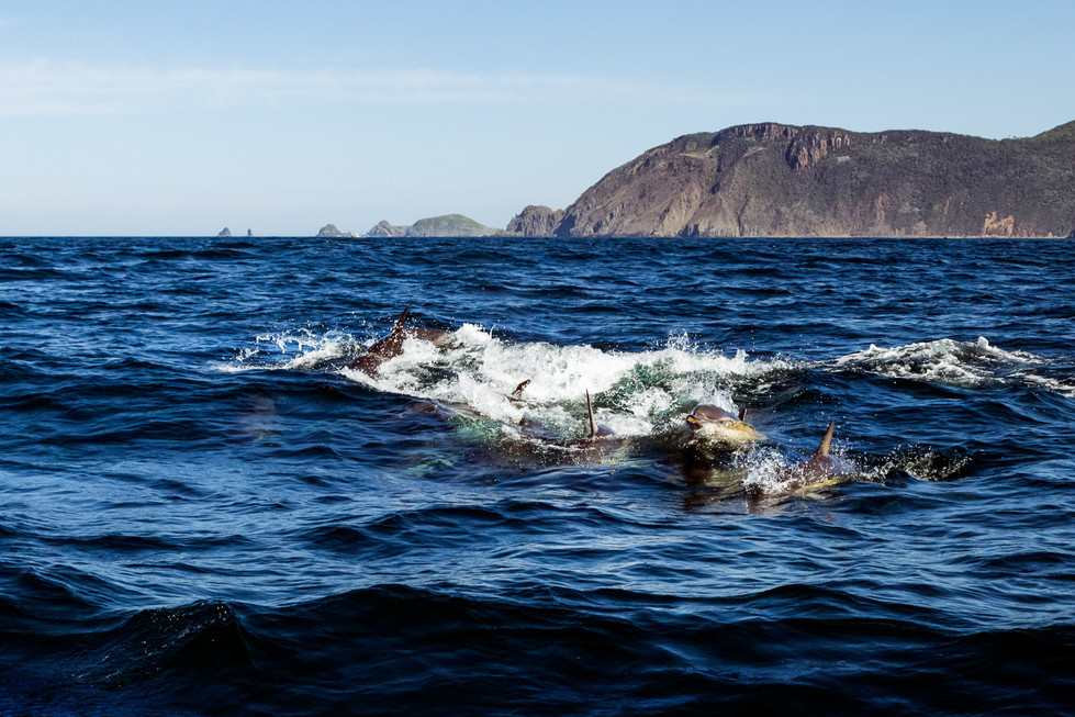 Robert Virgin | Dolphin Feeding Freny