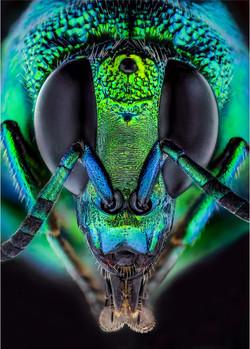 Don Binkins - 17-A-set-neon blue wasp