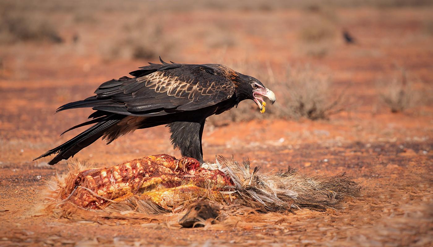 Margaret Kossowski - outback lunch - MERIT