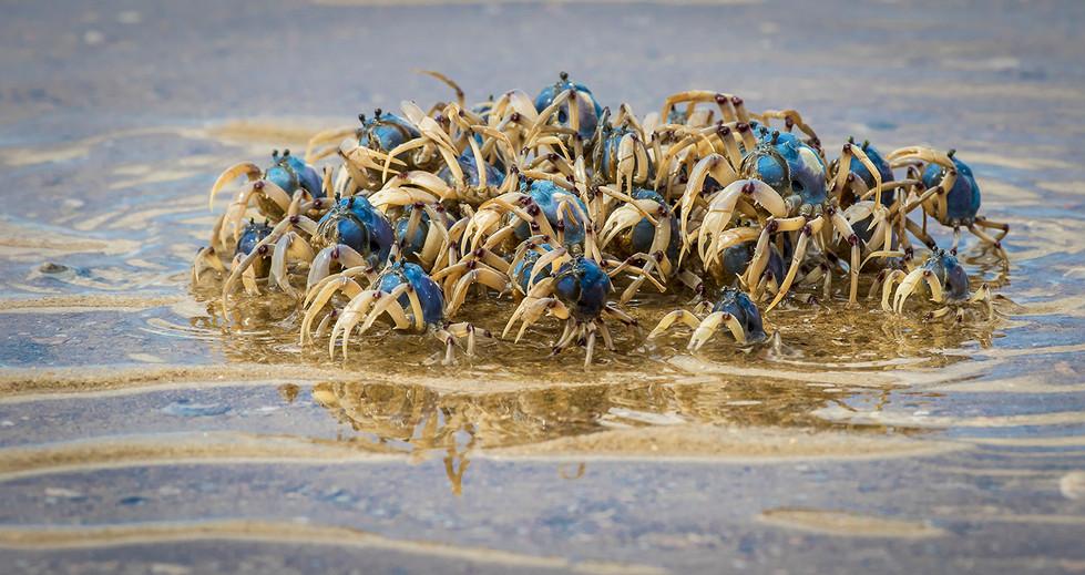 John Abbott | Soldier Crabs - HONOUR