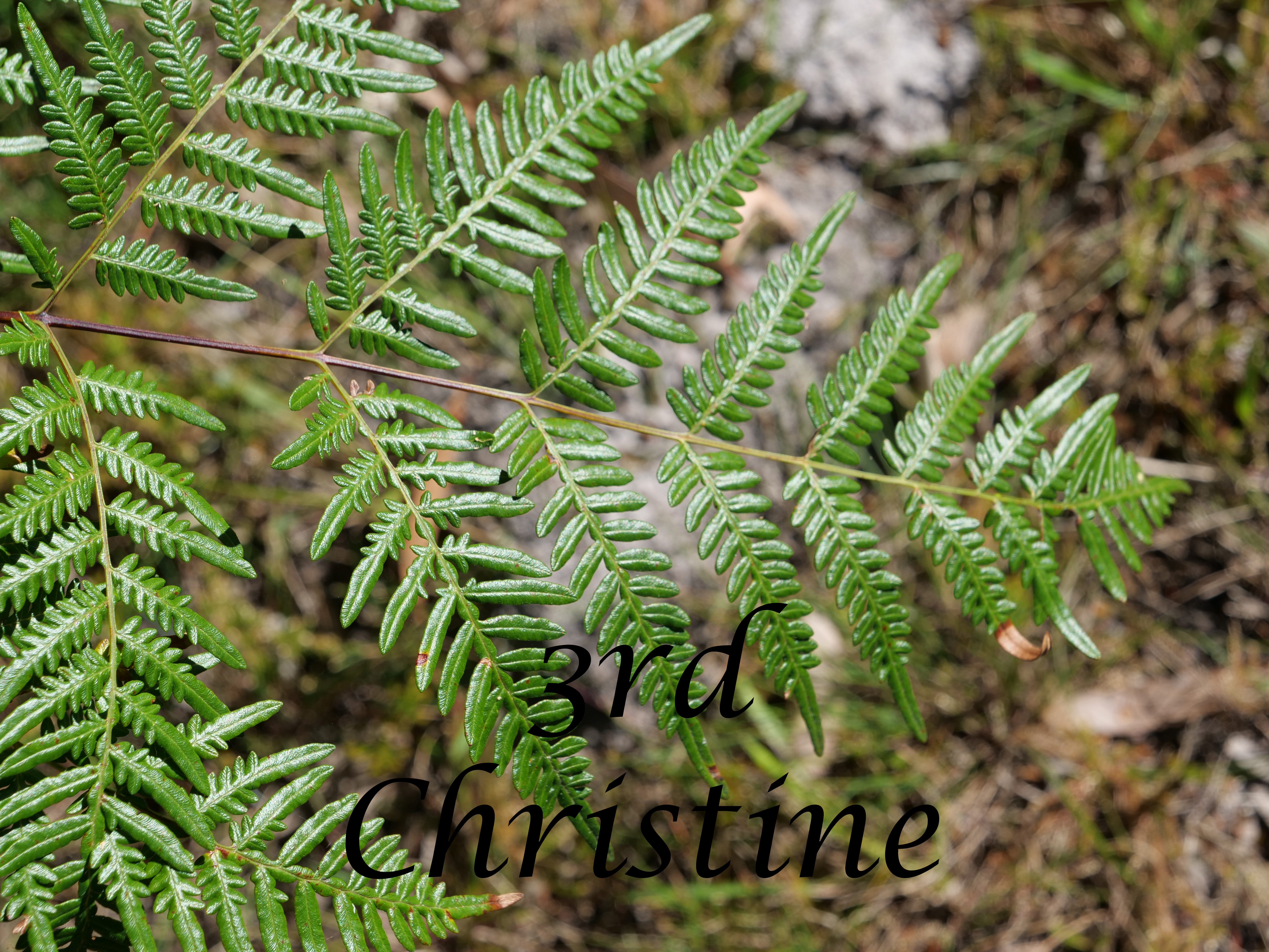 Leaves 3rd Christine