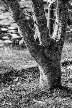 Jessie Wein - Branching Out