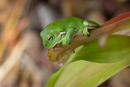 John Abbott - Frogs One (MERIT)