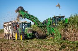 Sugar Cane Harvest 2nd Theme