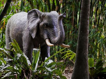 Bamboo Land - February Safari
