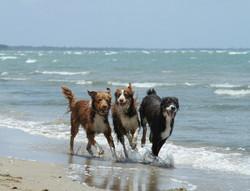 PI_4_19_beach trio