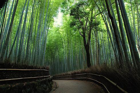 arashiyama bamboo grove.jpg