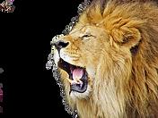 Download-Roaring-Lion-PNG-File_edited.pn