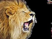Download-Roaring-Lion-PNG-File_edited_ed